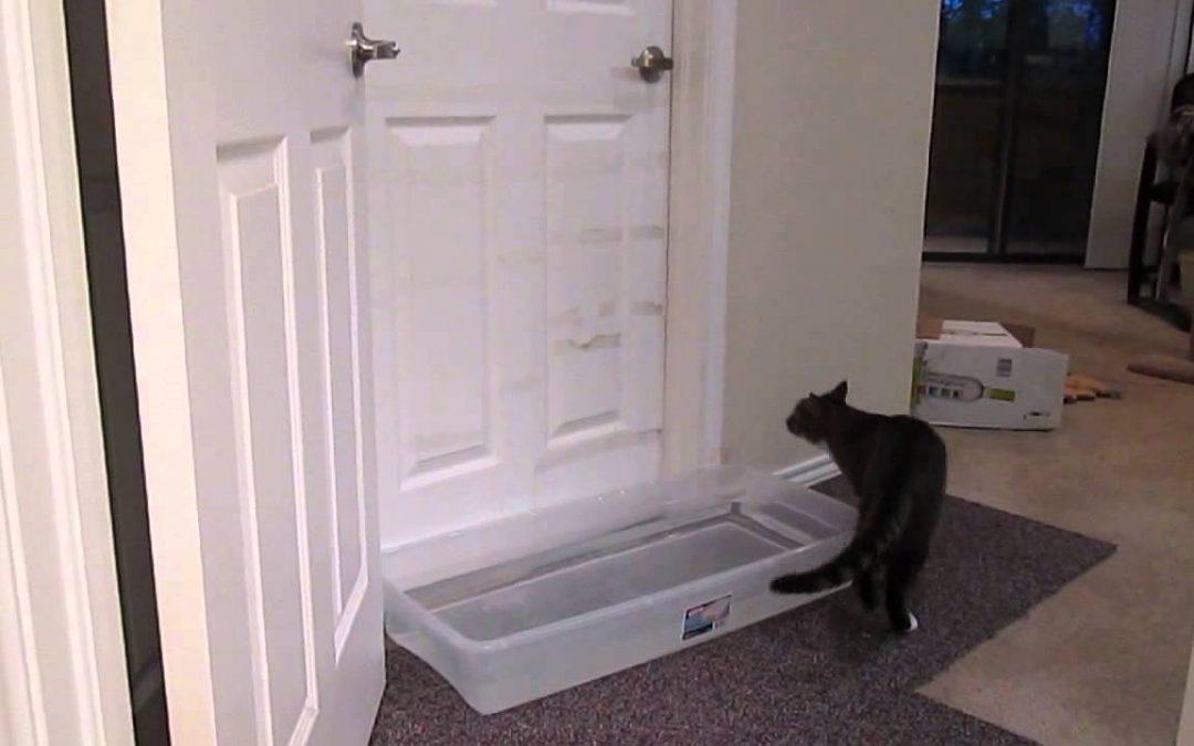 Eine Wasserfalle, die angeblich Katzen davon abhalten soll, eine Tür zu öffnen