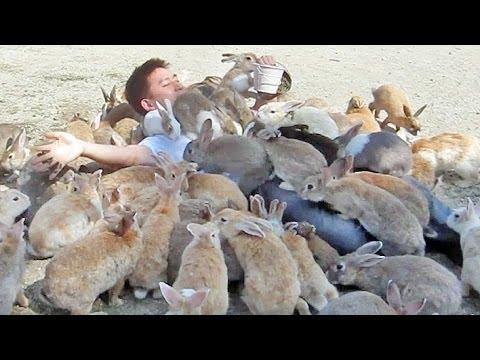 Kaninchen-Insel Kuschelalarm